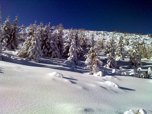 Small forest near Kasprowy