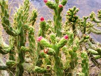 Cactus along Trail near Llamac