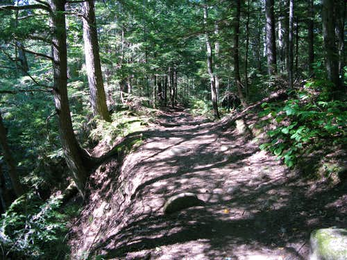 Nineteen Mile Brook trail