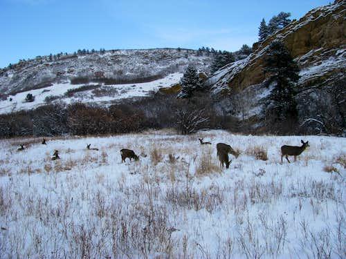 Willow Creek Trail