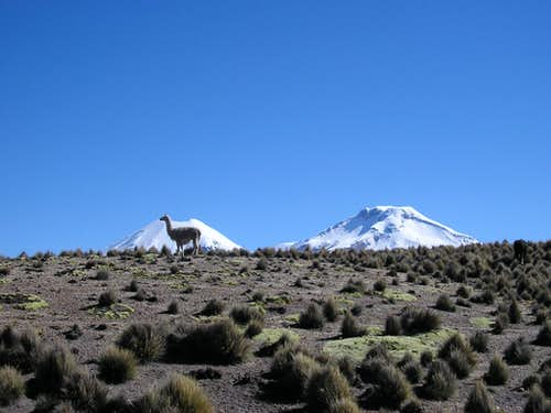 view of Pomerape and Parinacota from near to Sajama village