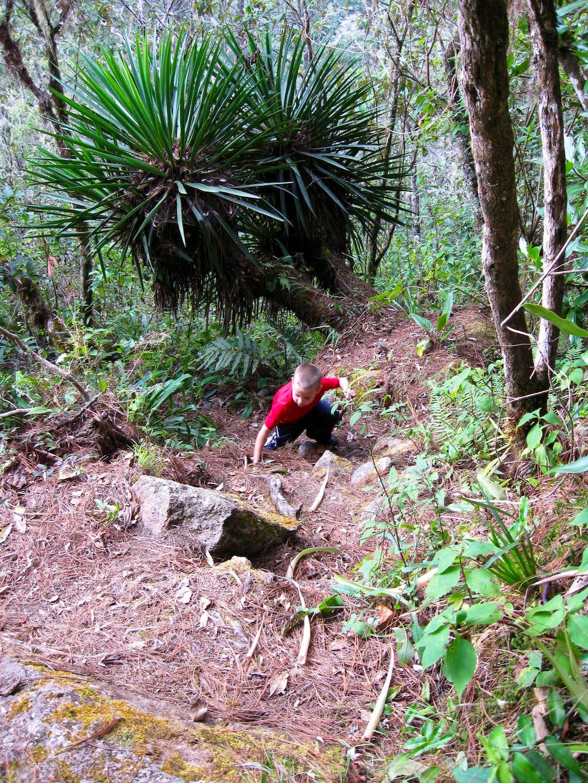 Climbing Montaña de Celaque