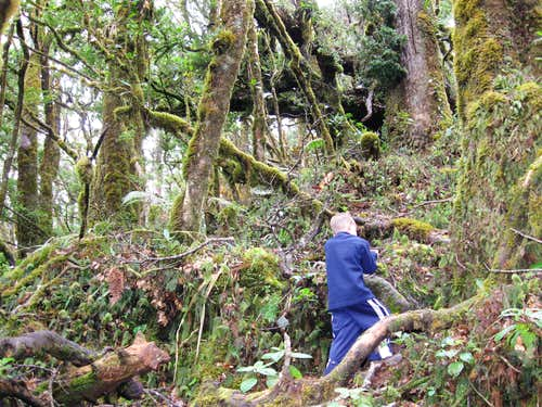 Cloud forest walking