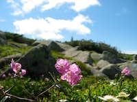 Flora of Katahdin