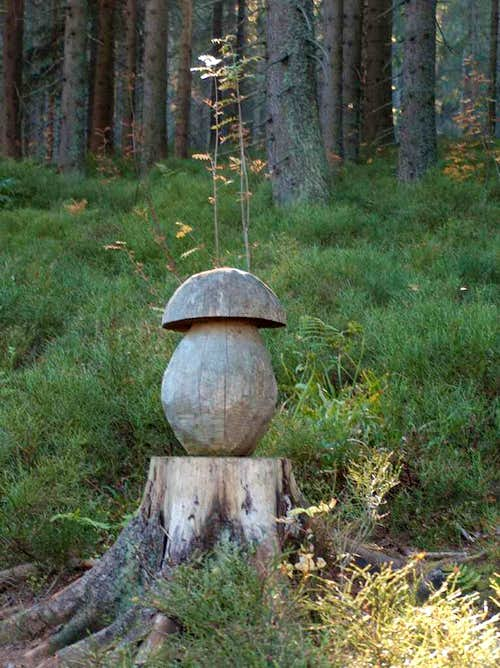 Wooden mushrooms in the forests of Pilsko