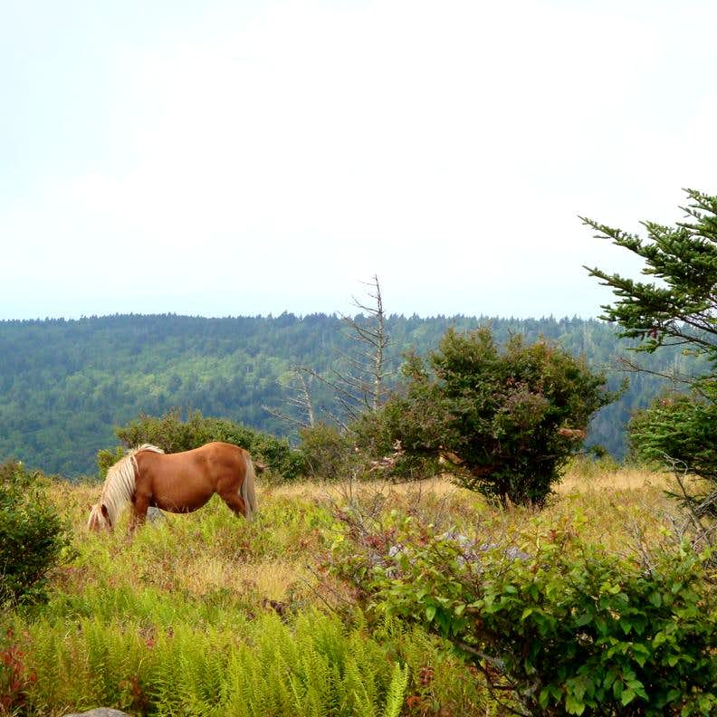 Rogers pony