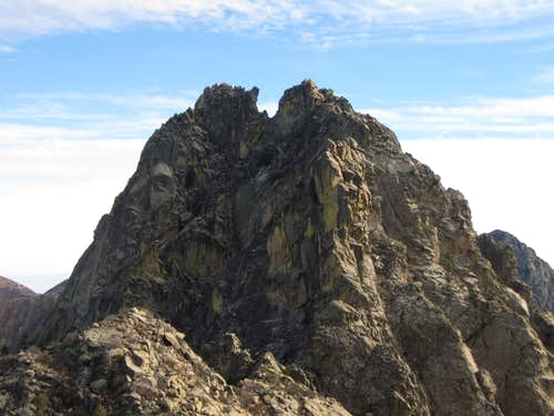 Organ Needle from the Wedge