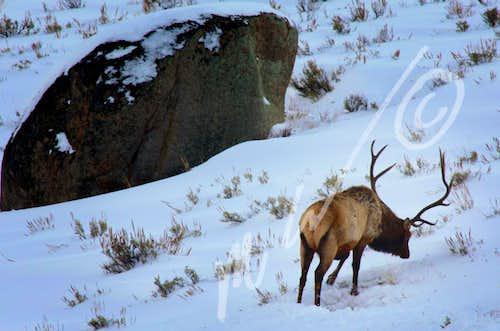Winter foraging