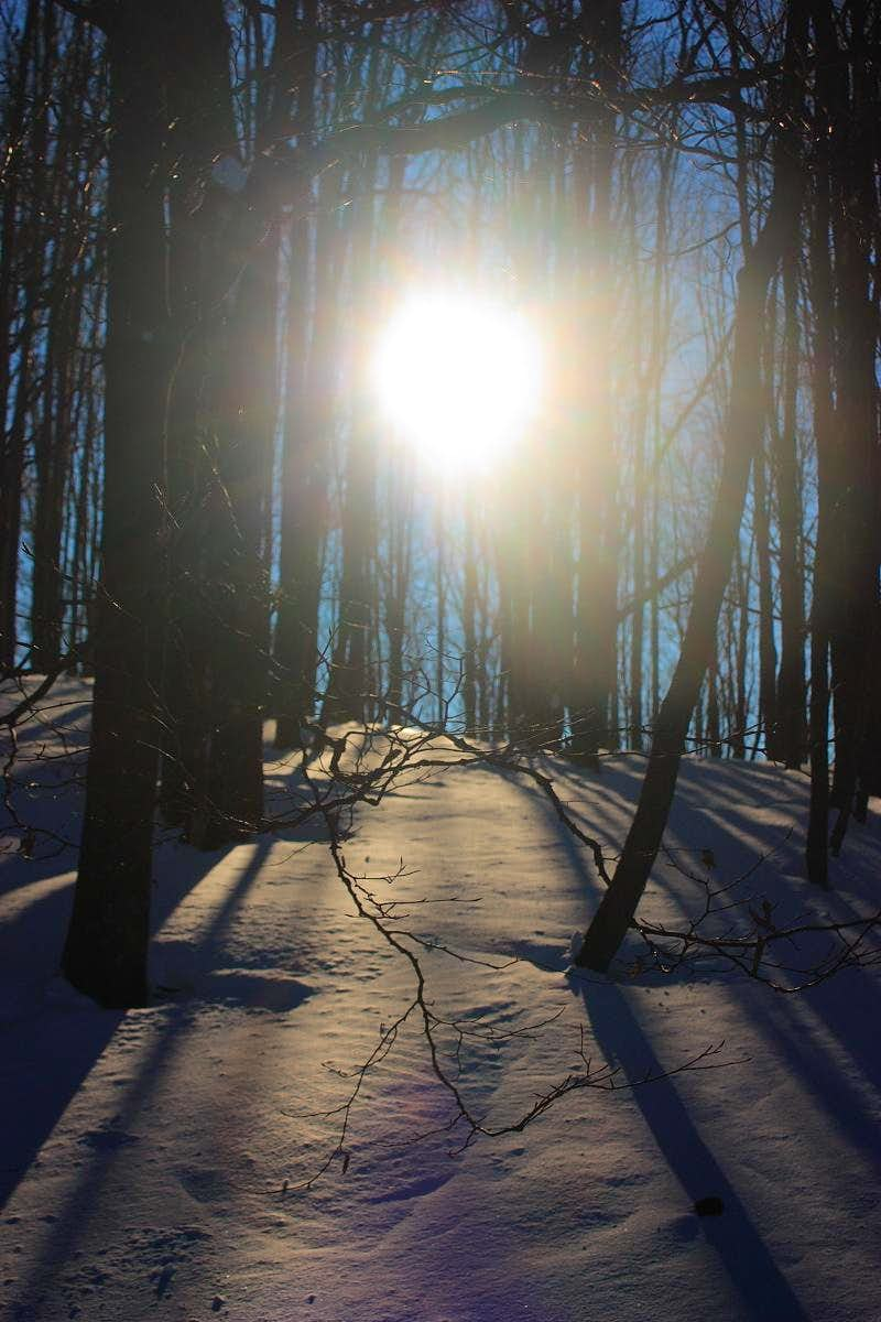 The forest and the Sun