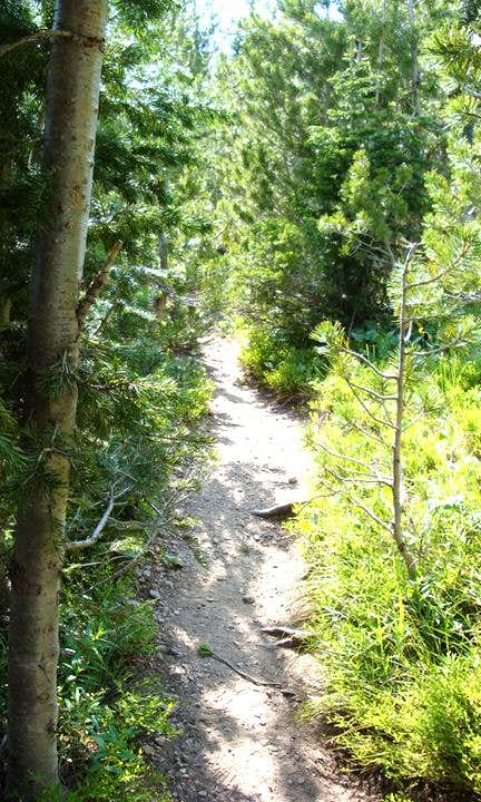 Forset Trail