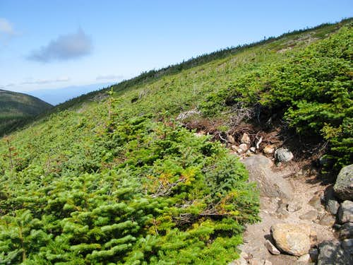 the trail on Mt. Guyot