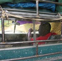 Truck Driver in the Blue Mountains, Jamaica