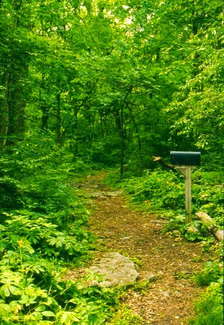 Typical trail along the...