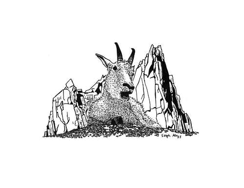 Drawing of Mountain Goat and Prusik Peak, Enchantments, WA