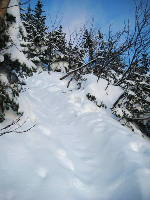 Fresh powder on the Lion Head Trail