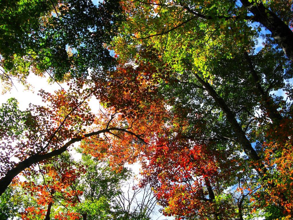 some beautiful Catskill color