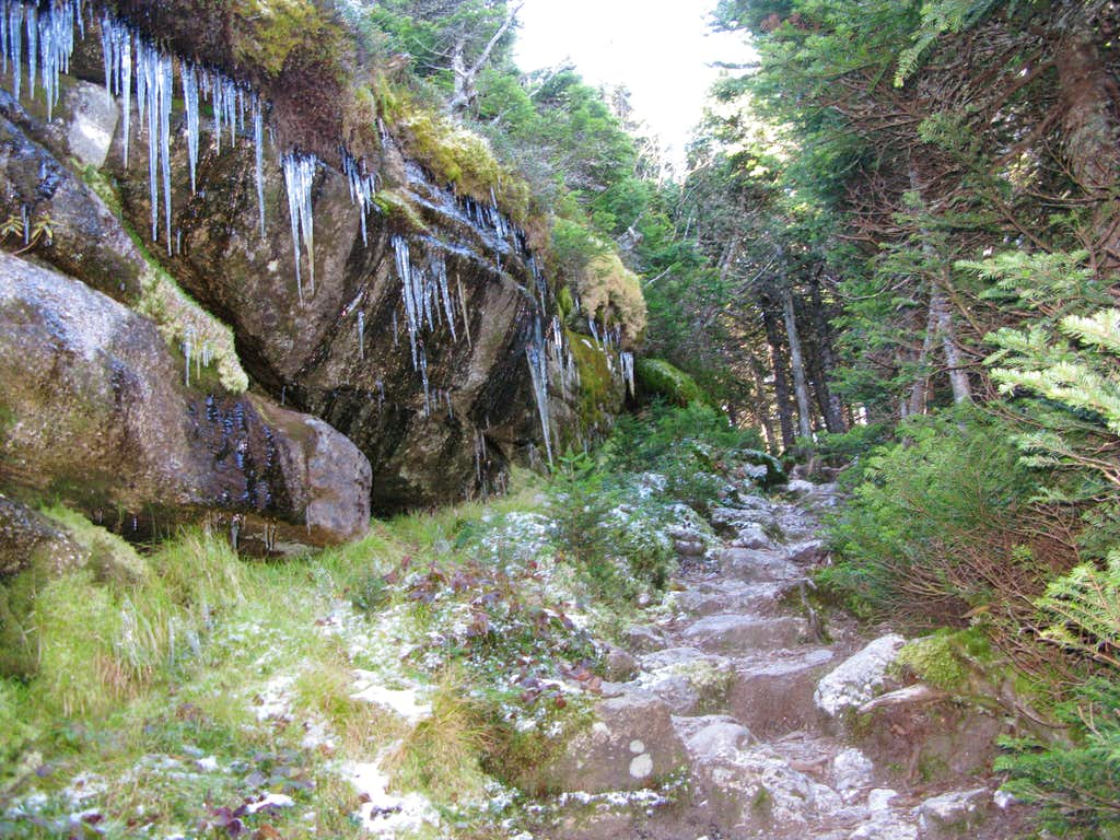 some icicles by the trail