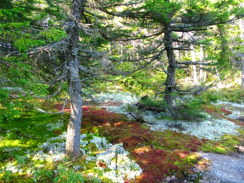 now that\'s some colorful moss!