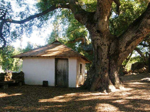 Adobe and Ancient Oak
