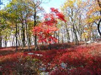 a red tree in a sea of red