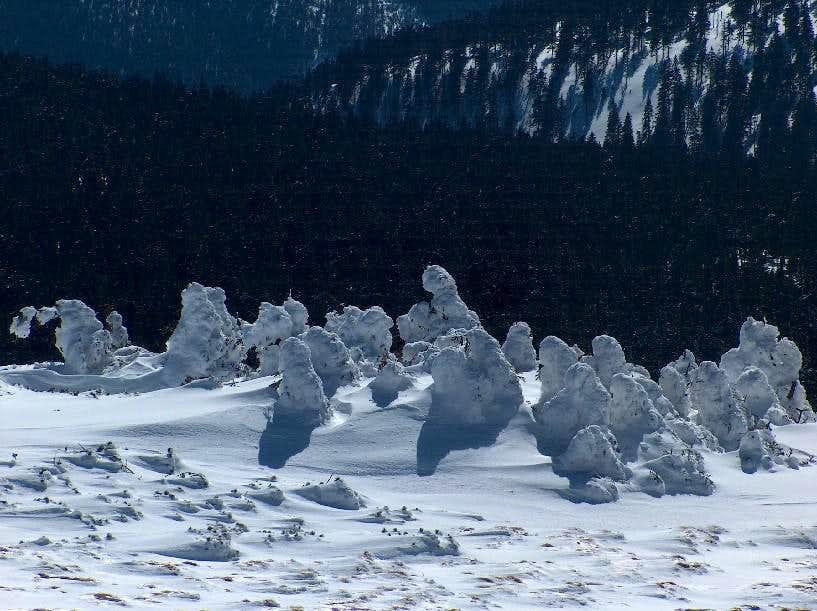 Frozen trees on the top of Keprník
