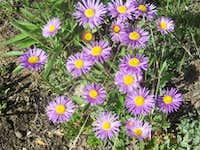 flora on karakoram mountain