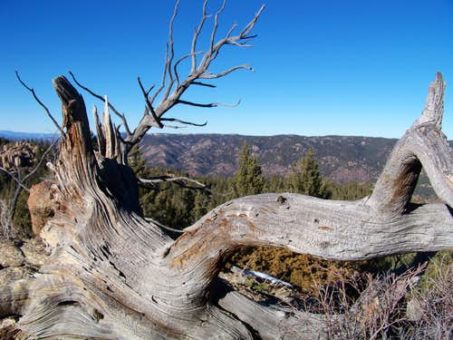 Ghost Tree on Southeast Summit of Mount Esther