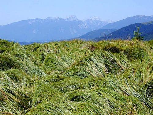 The grassy summit of...