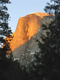 Half Dome through the trees