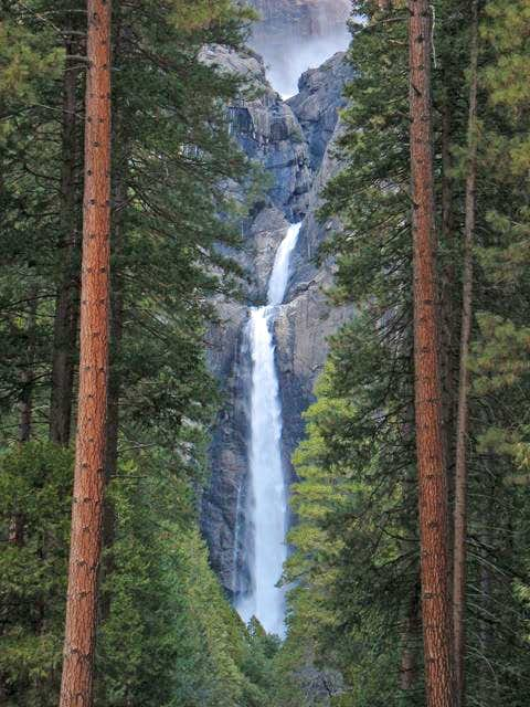 Yosemite Falls and Sequoias