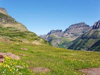Meadow in Glacier