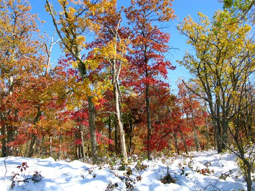Yellow and Red trees in the snow