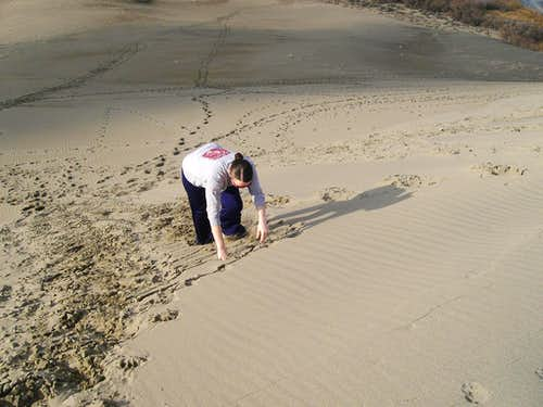 Spider Crawl in the Sand