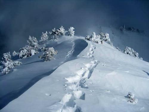 Snowy Backbone