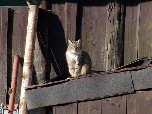 Cat in Štefanová