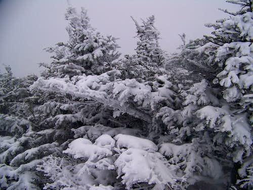 Bigelow summit ridge
