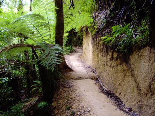 The Abel Tasman Coastal Track