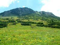 Hajla - meadows