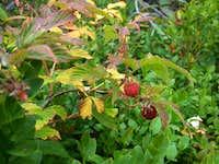 Bjelasica - mountain fruits