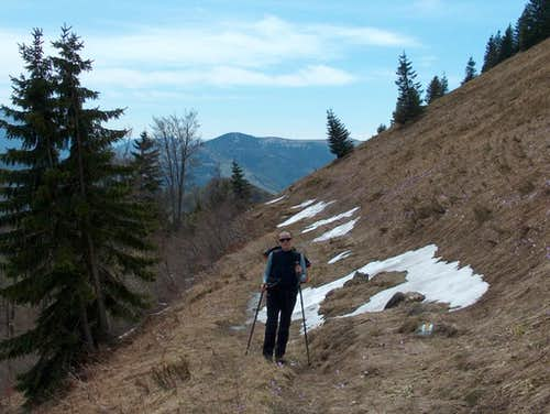 The Rakytov trail is strewn of crocuses in this early spring.