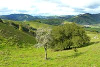 Lone tree and west Marin hills