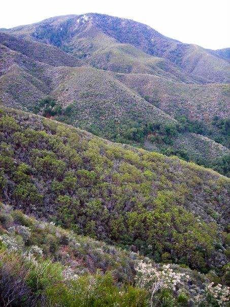 Agua Tibia - first glimpse