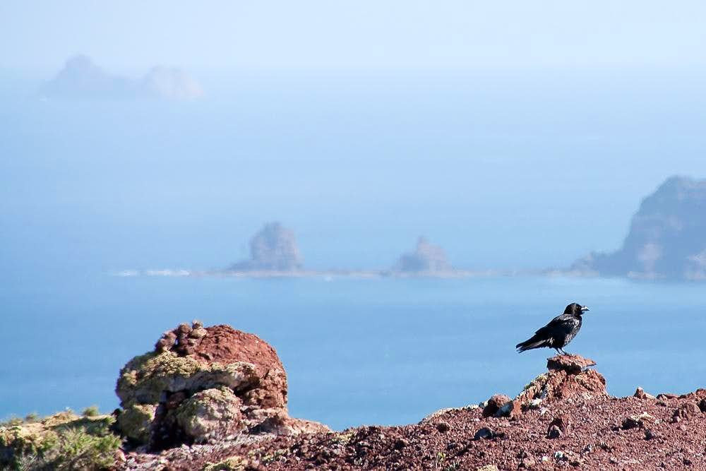 Raven on Montaña Amarilla