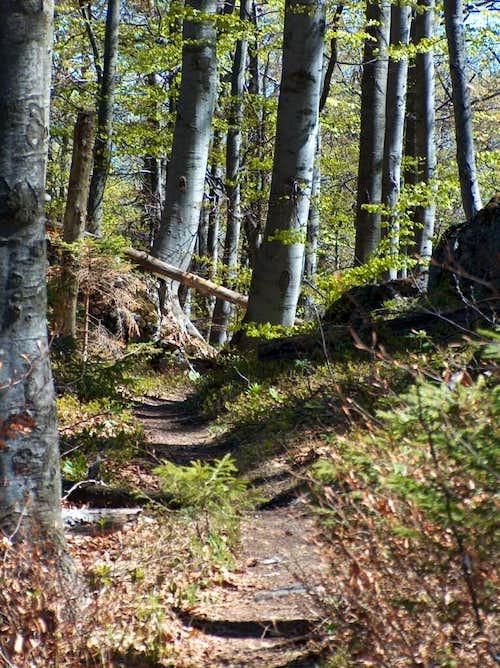 Forest trail in Veľká Fatra
