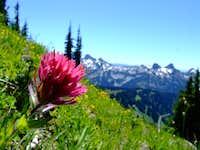 Rainier Wild Flowers