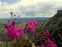 Mesa Verde Flowers