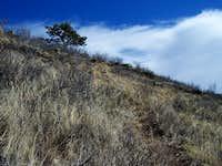 Game Trail Near Summit