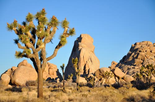 joshua tree national park women Visitors can explore 800,000 acres of beautiful terrain in joshua tree national park, where wildlife thrives in temperatures over 100 degrees.