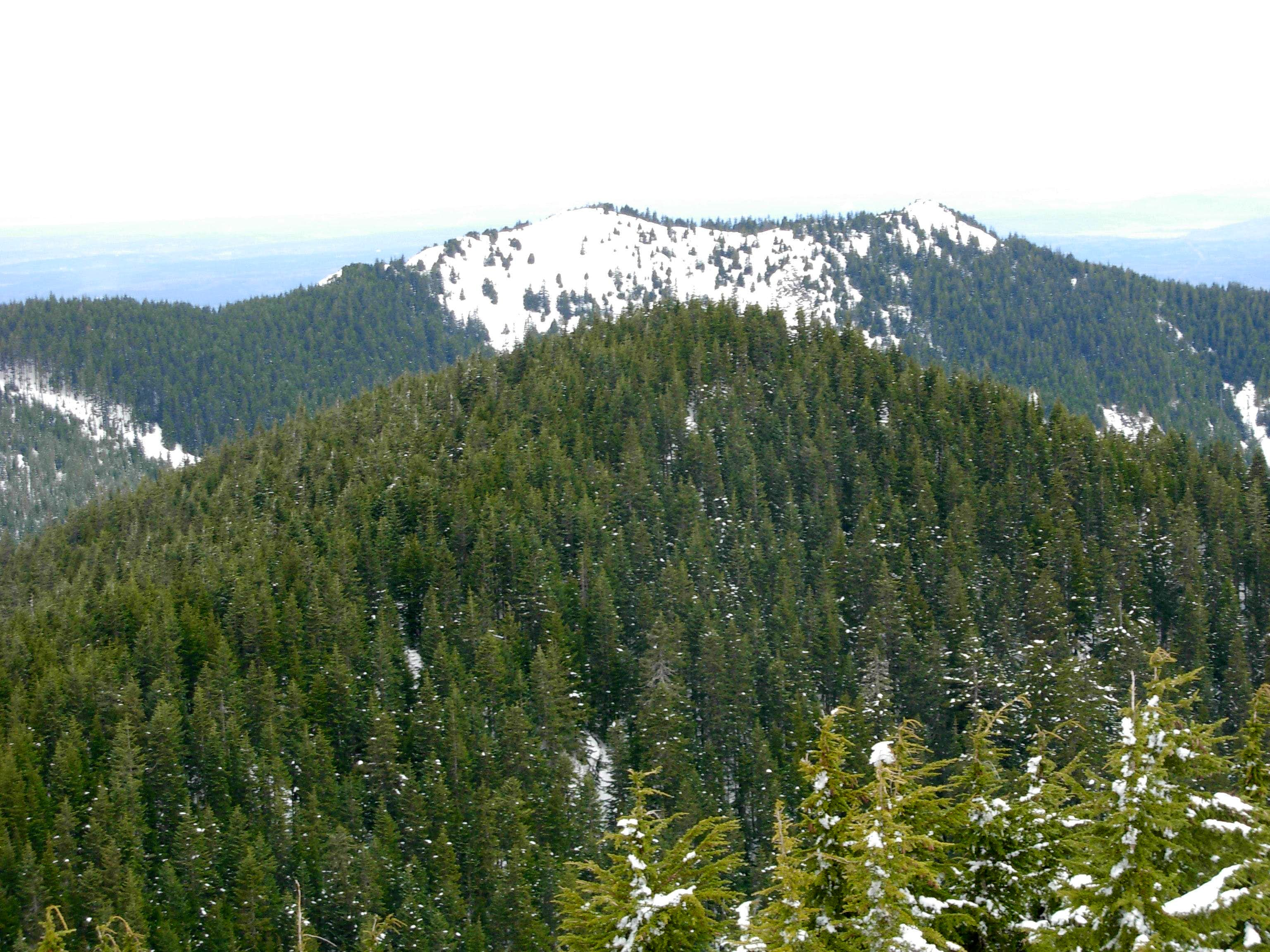 Teneriffe-Dixie Loop, March 2009