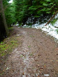 Mount Teneriffe Road-Trail